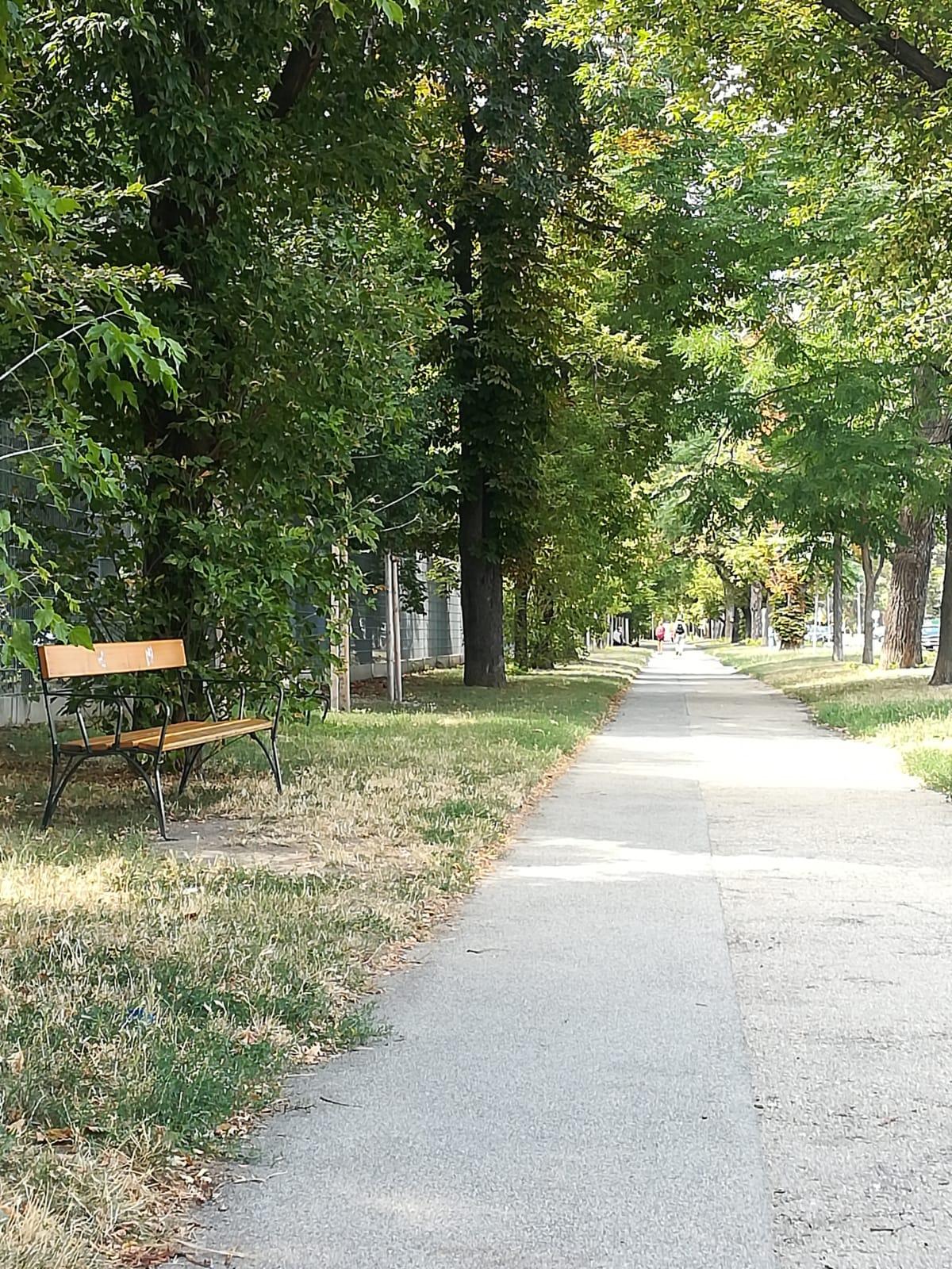 Peaceful path through trees